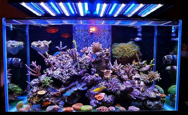 Saltwater Reef Aquariums Photo Fish Tank Lights Marine Aquarium Marine Fish Tanks