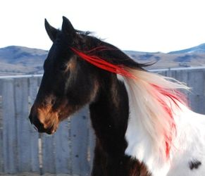 Coloring Horse Hair