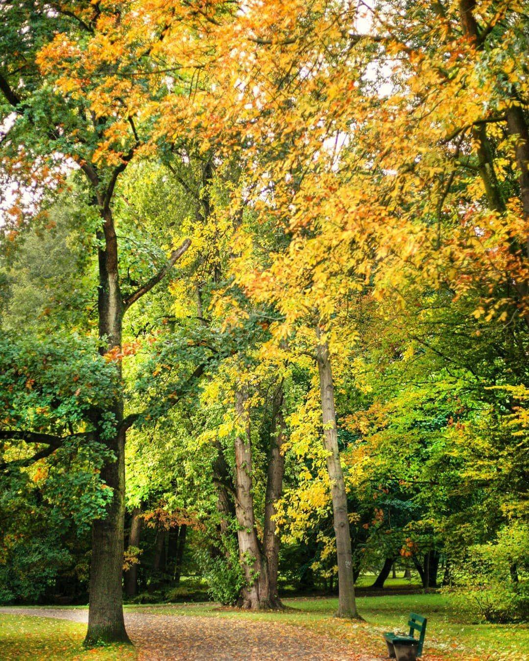 Autumn lights. Kassel, Karlsaue.  Photographer: @salogwyn_fine_Art  #nature #naturelovers #casselfornia #kassel #kasselfornia #wonderful_places #wonderfullife #beautifulnature #beautifullight #motherearth #worldbestshot #seascape #photography #divine_worldplaces #challenge #photooftheday #photoshoot #colorful #gurushotschallenge #gurushots #shotaward #ig_mood #autumn #autumnvibes🍁 #amazing_shots #tree_pictures #tree_magic #tree_love #color #colorful #yellow