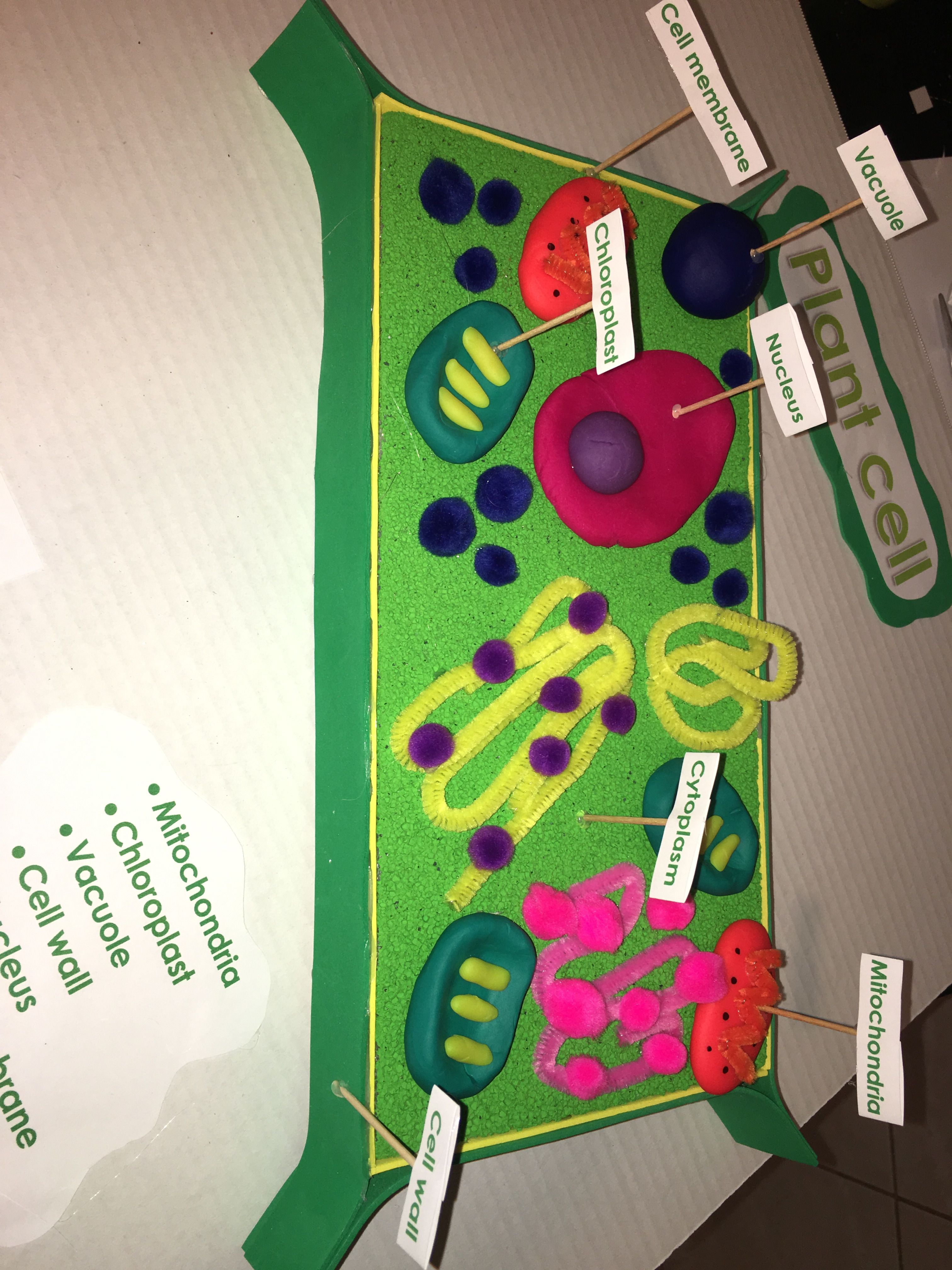 hight resolution of 5th grade 3d plant cell model