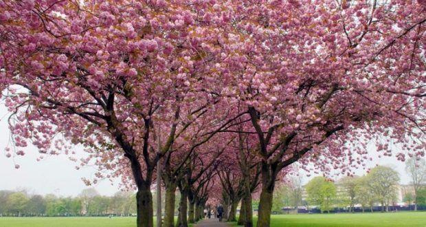 صور عن فصل الربيع 2017 رمزيات وخلفيات الربيع ميكساتك Tree Photo Plants