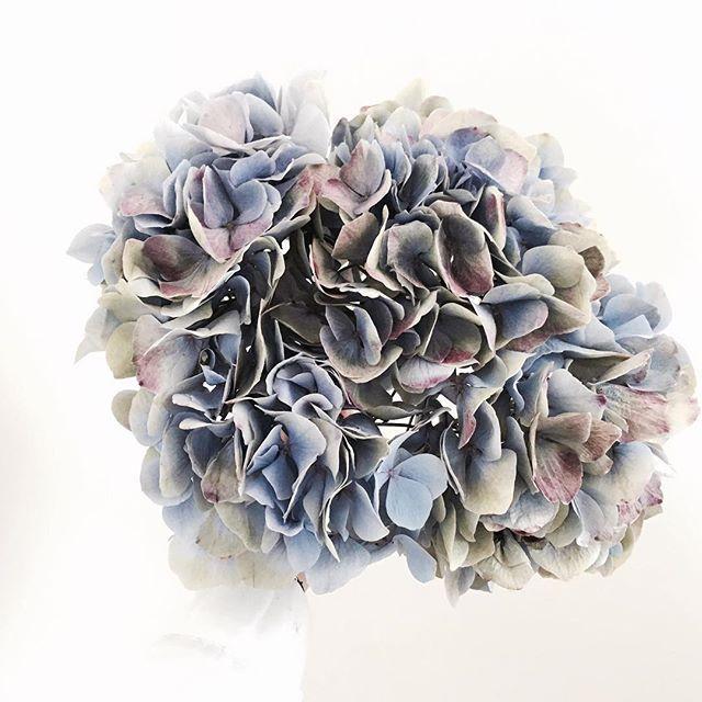 블스 카카오톡 내일 오전부터 답변 갈게요! . . . . . #bloomingswan #bloomingswanflower #꽃꽂이 #꽃집 #원데이클래스 #florist #flowers #블루밍스완  #블루밍스완플라워 #일상 #꽃배달 #웨딩 #꽃다발 #블스테이블 #플라워레슨 #플로리스트 #플라워클래스 #꽃 #꽃스타그램  #플로리스트학원#花#花艺#花店#花艺师#花束 #花卉研究者 #花商 #花农