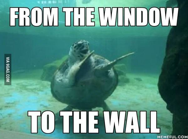 I Immediately Thought Of This When I Saw The World S Happiest Turtle Turtles Funny Funny Memes Dance Humor