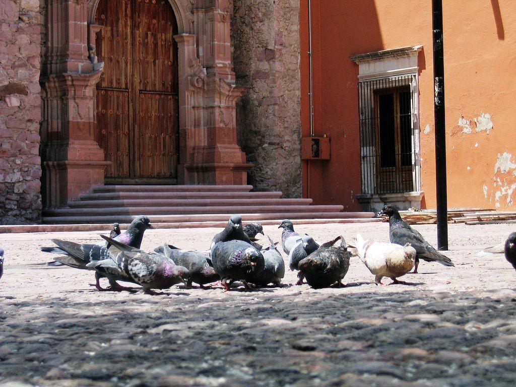 Muy buenos dias!!!  ¿Que tal su fin de semana?   Gracias a Aguascalientes, ags. México. y a Marco de Luna por esta linda foto en el Barrio de Triana, afuera del Templo del Encino!!!!  Si te gusta, Repinea!!!