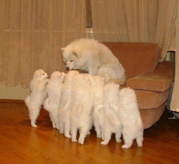Mommy tending to  so many baby's!!!!