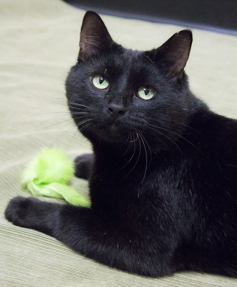 Top 100 Black Cat Names Cats and kittens, Beautiful cats