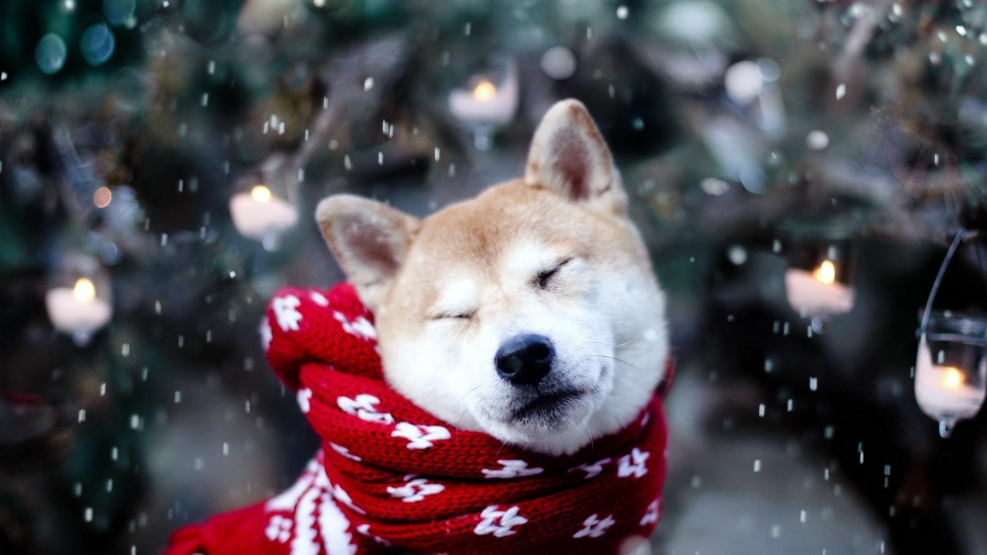 Pin von Kathrin Gates auf Just Animals | Pinterest | Dogs, Animals ...