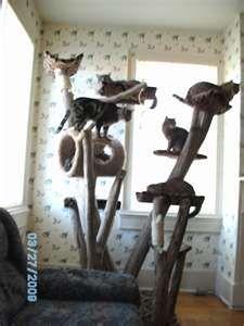 Build your own cat furniture | crazy meezer