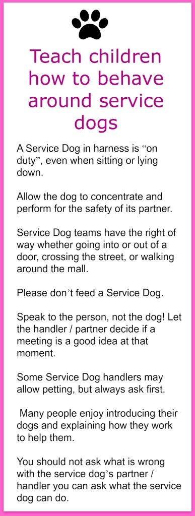 Teach Children How To Behave Around Service Dogs Children Learning
