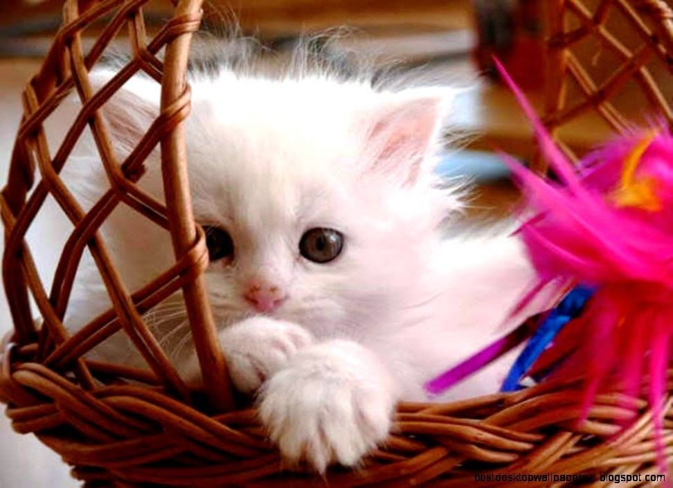 Sweet Cats Wallpaper With Images Baby Cats Kittens Cutest
