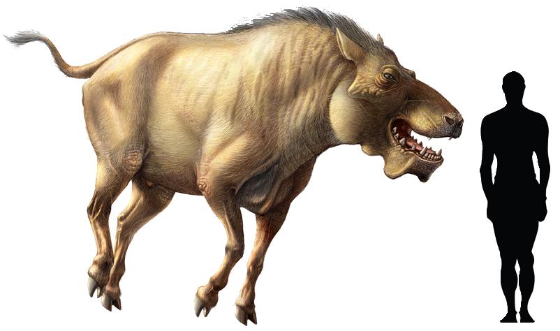 "Prehistoric taxonomy   Daeodon shoshonensis (""terrible pig ..."