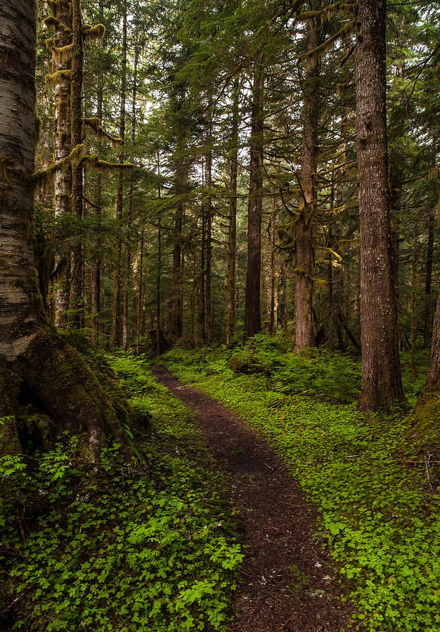 Pin By Maritza Gutierrez On Naturelover In 2020 Fantasy Landscape Forest Path Landscape