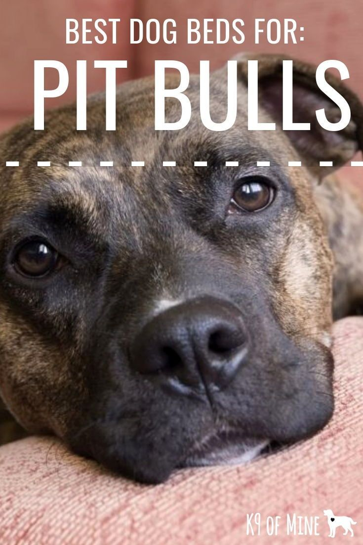 5 Best Dog Beds for Pit Bulls [2020] Supportive, Comfy