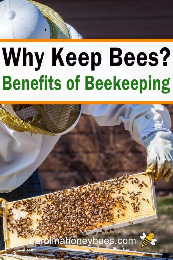 Benefits of Beekeeping In Your Backyard- Carolina ...