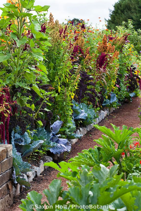 Intensive Organic Mixed Vegetable Garden Interplanted With