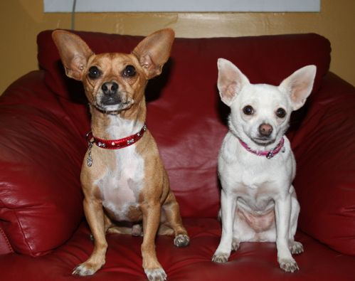 Top 10 Celebrity Dogs Of All Time With Images Beverly Hills