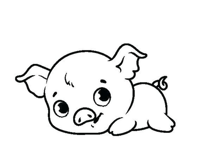 Cute Pig Coloring Pages Ideas Huge Collection Baby Pigs Cute