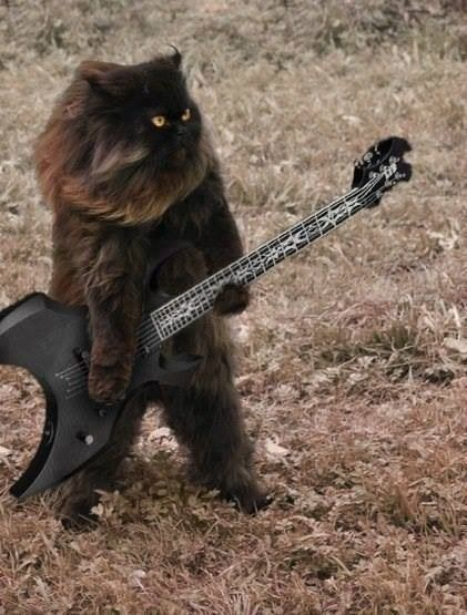 Black Metal Cat, i must be in an extremely great mood to be laughing at this