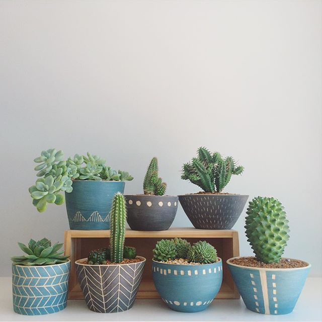 Cacti and succulents in beautiful pots cacti and for Cactus in pots ideas