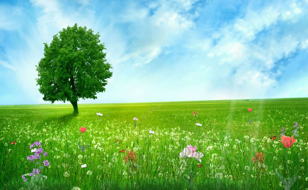 Happy Spring Day Wallpapers Http Www Hdwallpapersphoto Com 10724 Happy Spring Day Wall Nature Desktop Wallpaper Green Nature Wallpaper Hd Nature Wallpapers