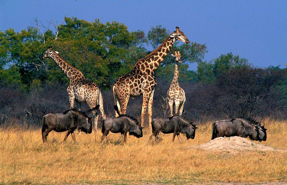 Africas Top Best Safari Parks Africa Park And Zimbabwe - 10 best safaris in africa