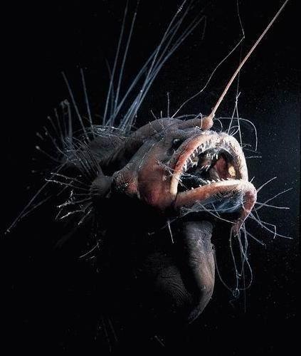 A black sea devil habitat