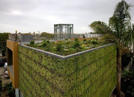Green Building Green Wall And Rooftop Garden For Modern Eco Homes