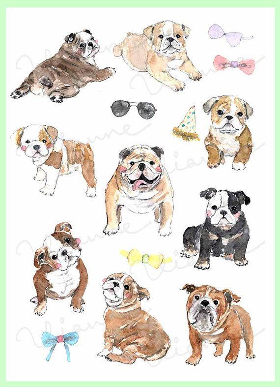 Clip Art Watercolor English Bulldog Set 16 Images Digital