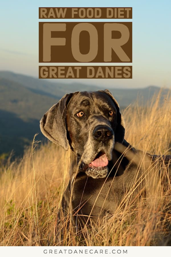 Thinking About Transitioning Your Great Dane To A Raw Food Diet Follow The Tips And Tricks For Implementing A Great Dane Raw Dog Food Diet Raw Diet Great Dane