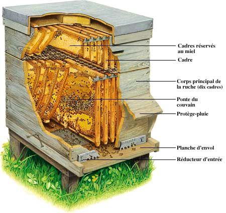 Construire sa ruche abeilles pinterest ruches - Comment fabriquer une ruche ...