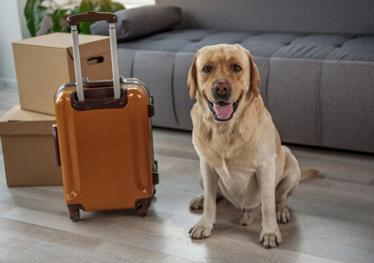 Moving With Pets 10 Tips For Success You Move Me Online Pet Supplies Buy Pets Pets