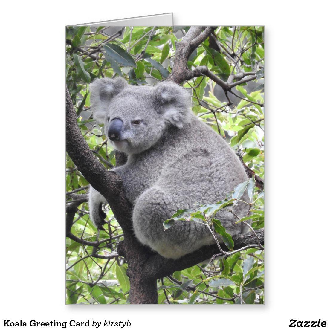 Koala Greeting Card Greeting Card Koalas And Cards