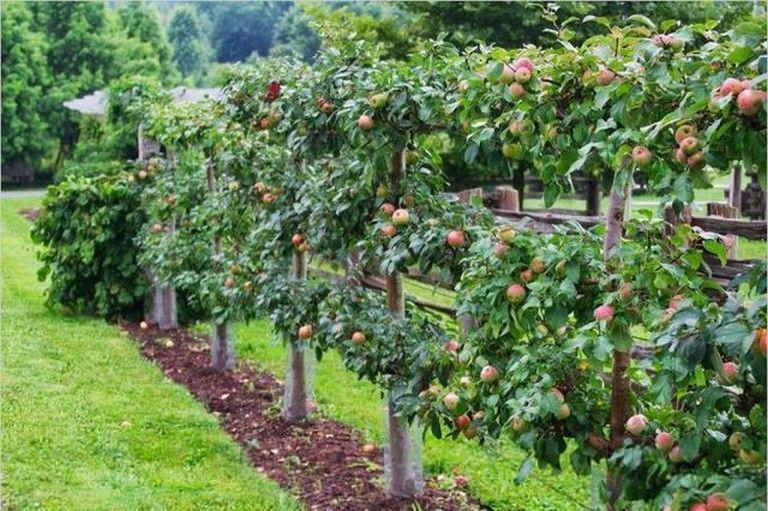 17+ Brilliant Fruit Trees Gardening Ideas Small Backyard # ...