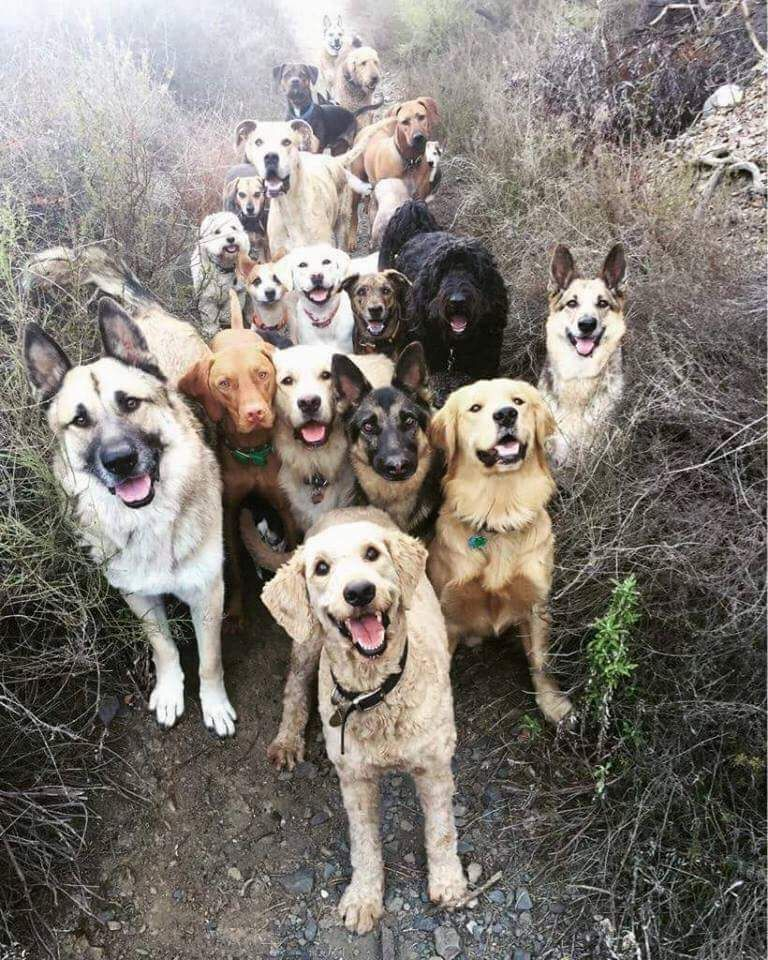 This Is What Greets You When You Get To Heaven Cute Animals