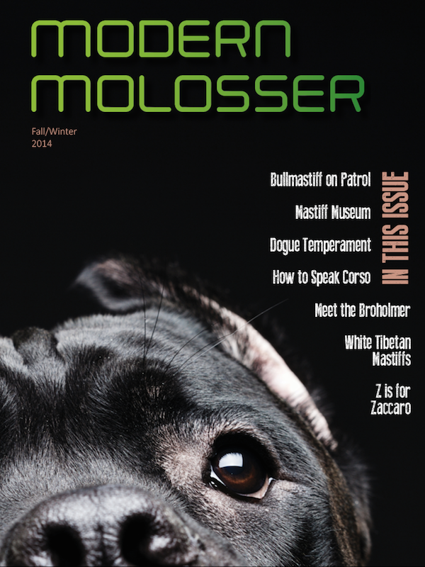 Our new Fall/Winter 2014 issue is here! Available on the Modern Molosser app for both Apple and Android smart phones and tablet readers! www.modernmolosser.com.
