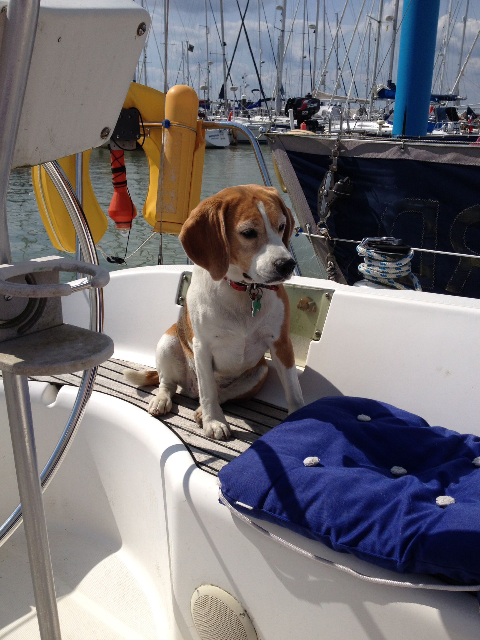 Millie The Beagle Enjoying Relaxing In Yarmouth Marina