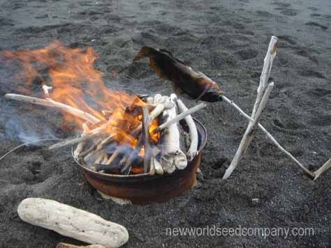 Fish Cooked Over An Open Fire Cook Until Flesh At Backbone Flakes Easily