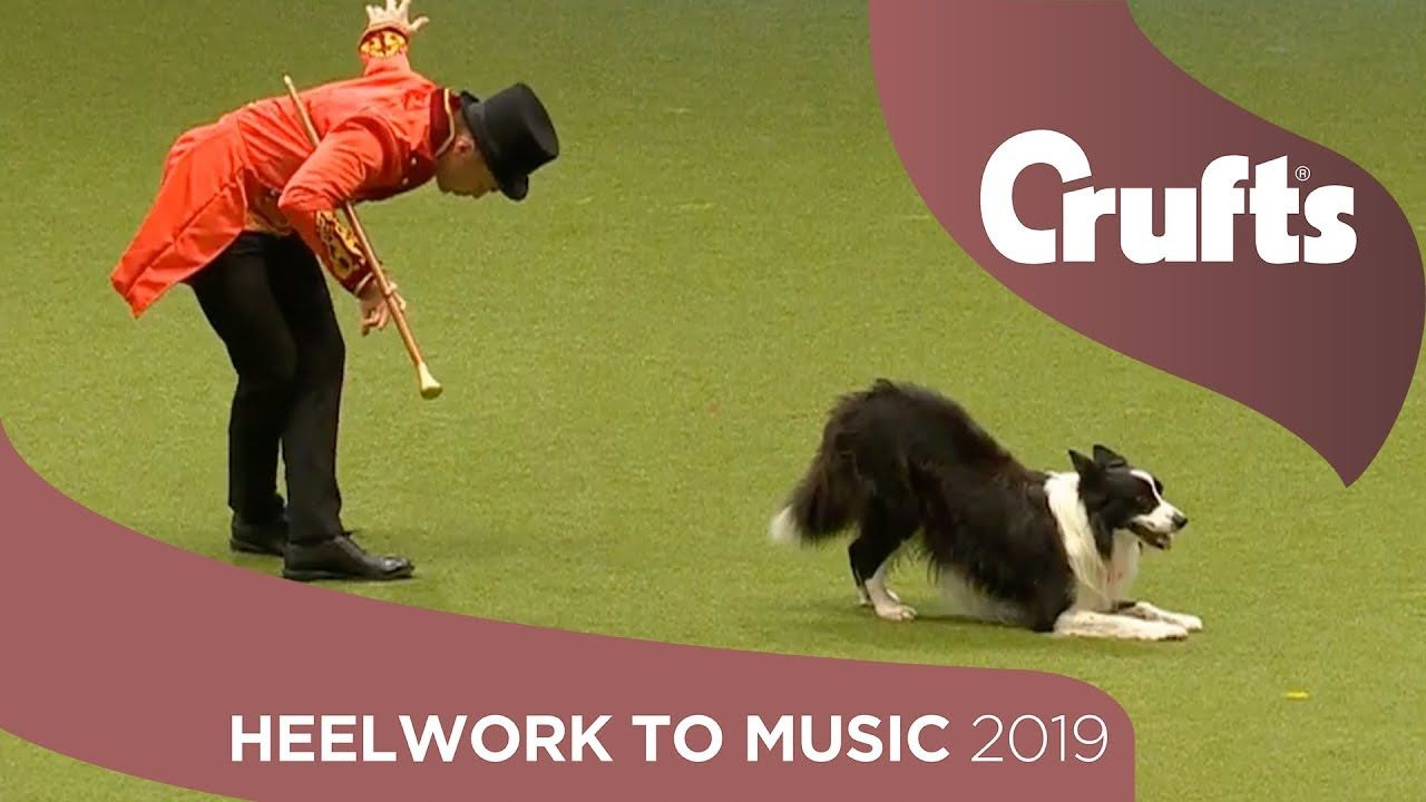 The Greatest Chowman Epic Heelwork To Music Performance Crufts