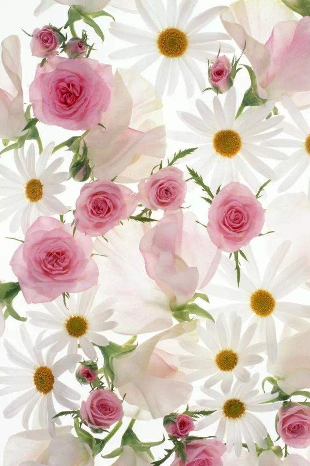 Flower Iphone Wallpaper Flower Iphone Wallpaper Iphone Wallpaper Cosmos Flowers