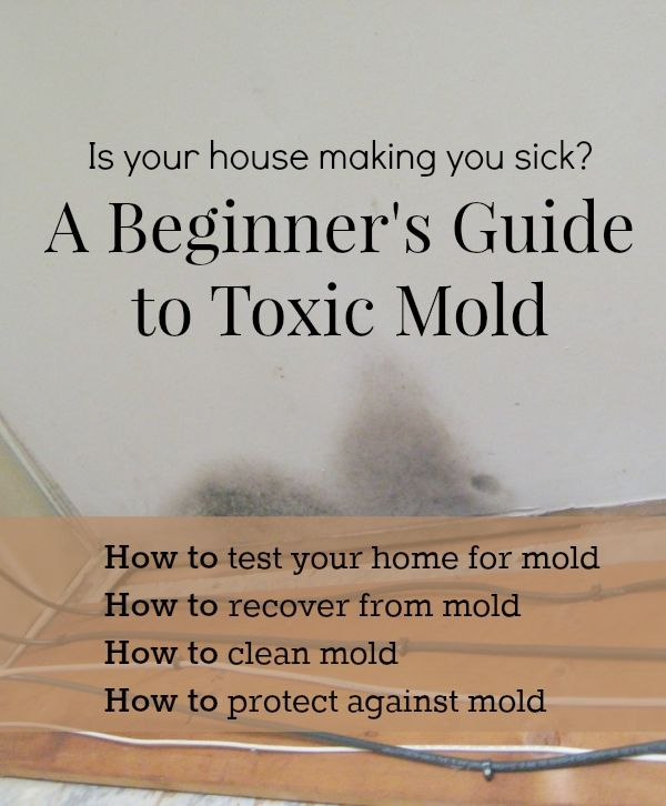 A Beginner S Guide To Toxic Mold Cleaning Mold Mold In Bathroom