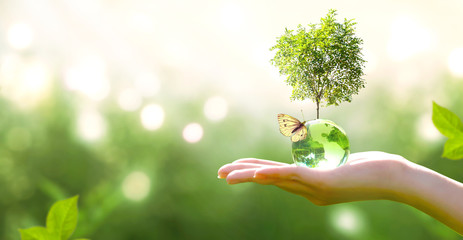 Vitality Stock Photos Royalty Free Images Vectors Video Green Backgrounds World Earth Day Growing Tree