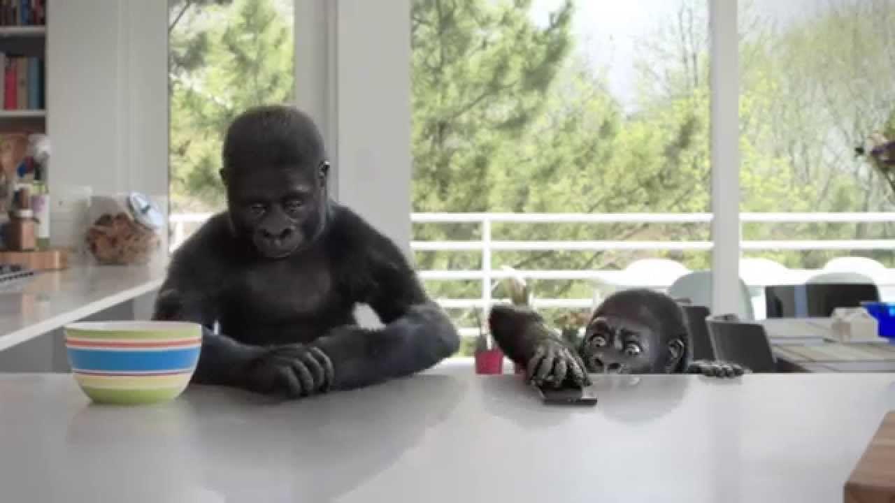 Corning gorilla glass 4 counter attack gorilla
