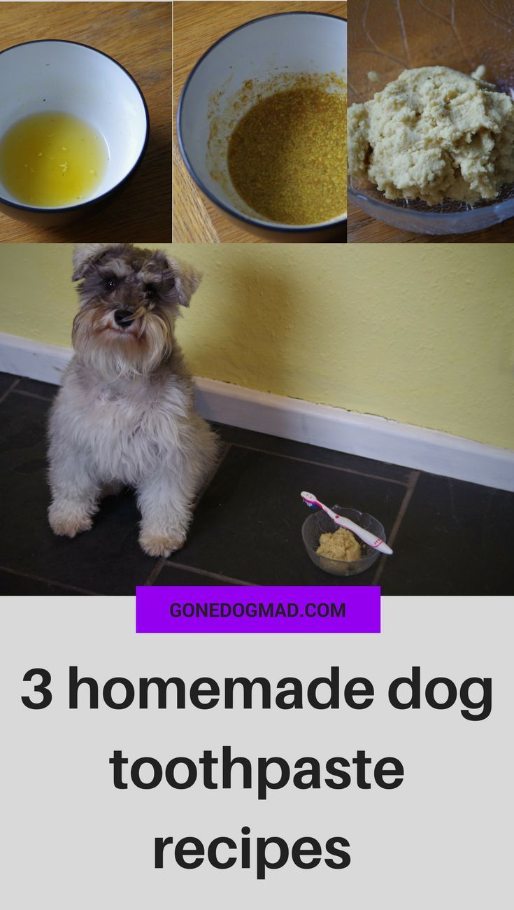 3 homemade dog toothpaste recipes - only 5 ingredients or