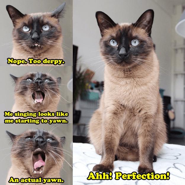 Crazy cat dating site