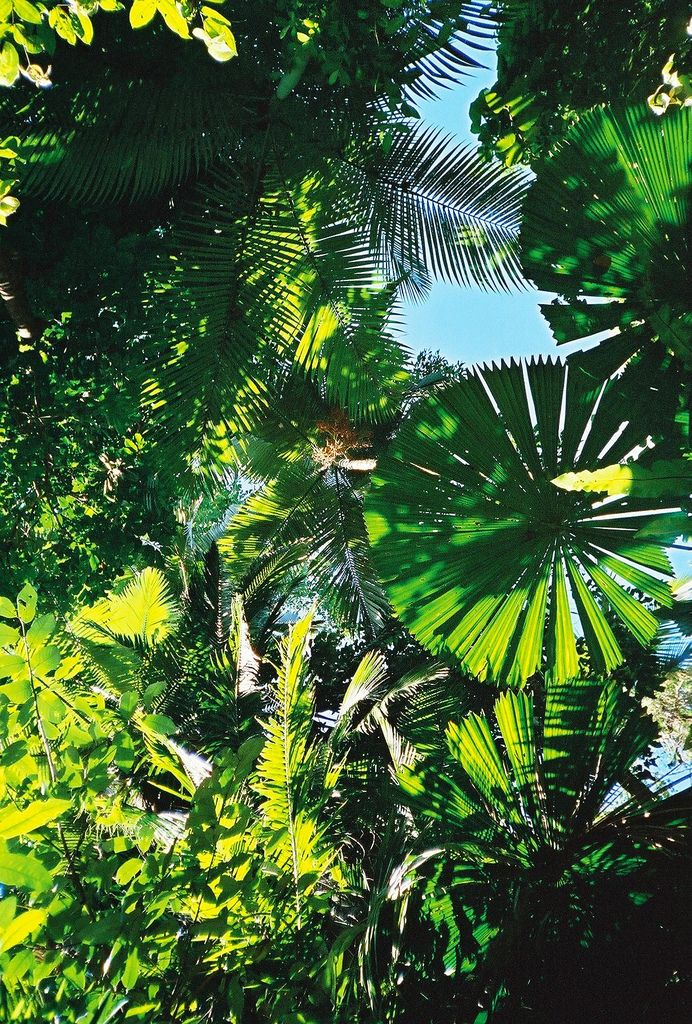 The Ultimate Aquatic Experience On The Gbr Rainforest Plants