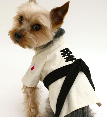 Karate Karate Dog Best Dog Costumes Dogs