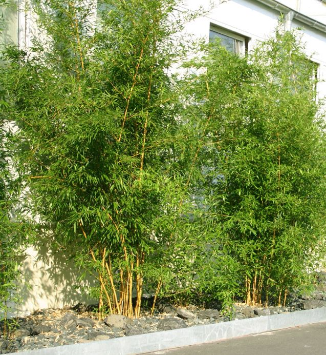 Bamboescherm Giant 180 x 120 cm Achtertuin hekken