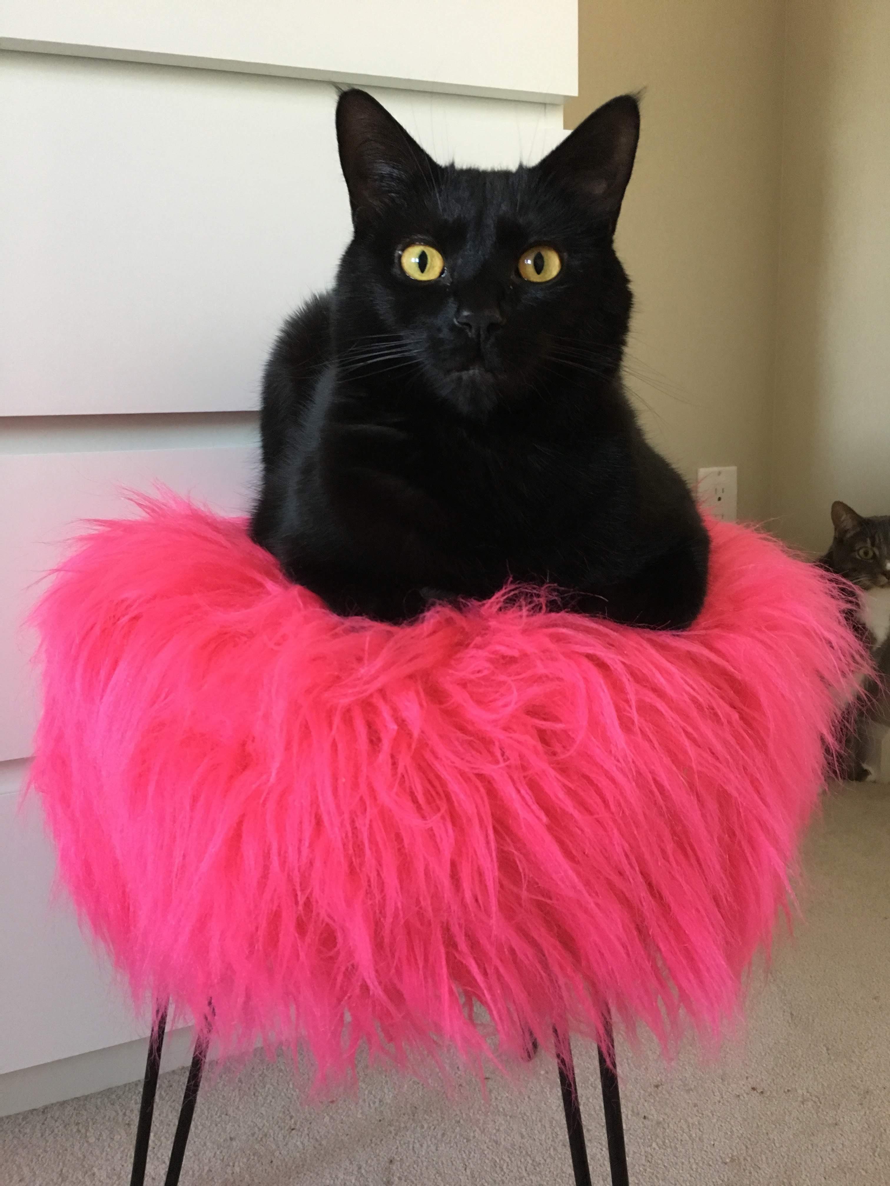 She Is Tutu Much In 2020 Black Cat Crazy Cats Cat Clothes