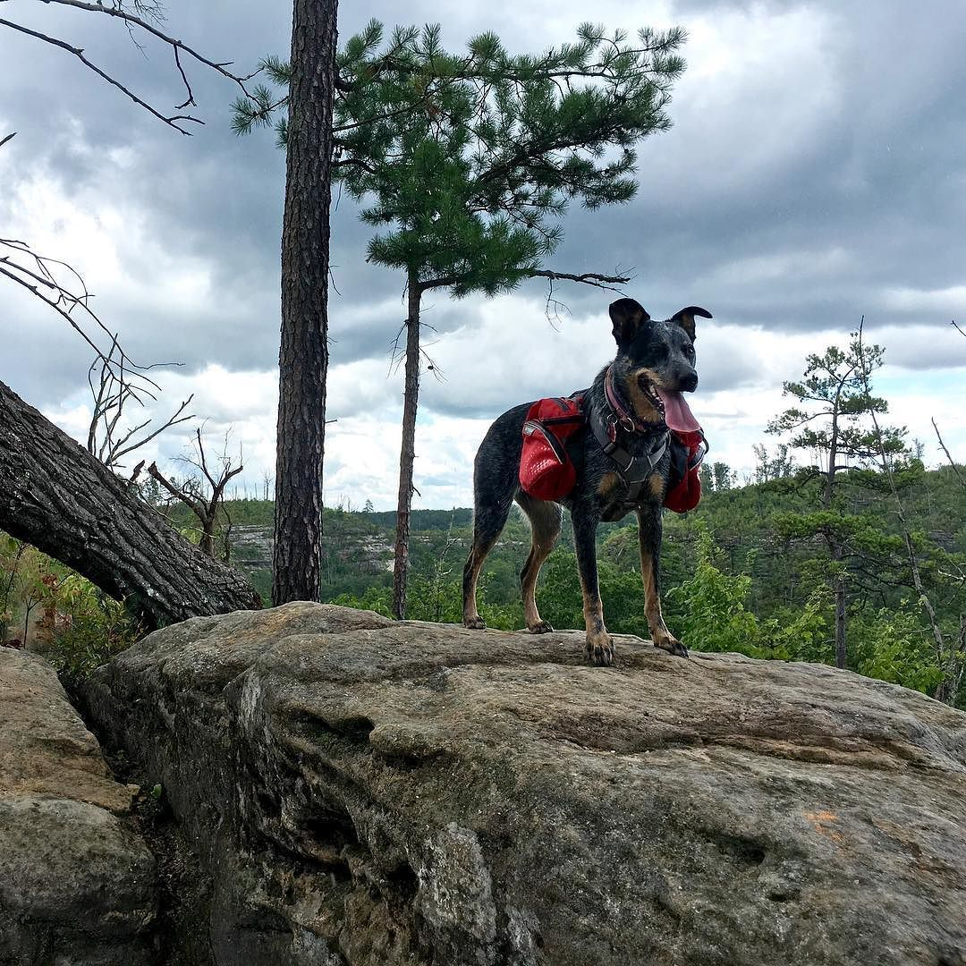 Roo getting a better view of the Red River Gorge. Her ...