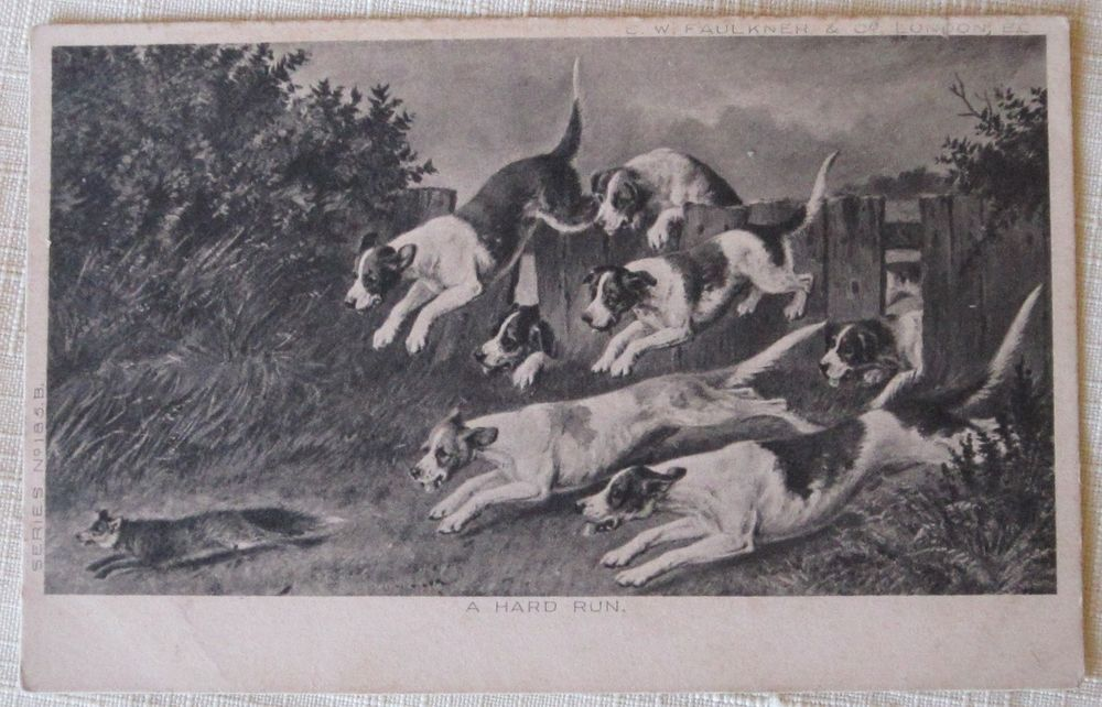 "HUNTING DOGS RUNNING AFTER A FOX ""A HARD RUN"" VINTAGE POSTCARD-1904  